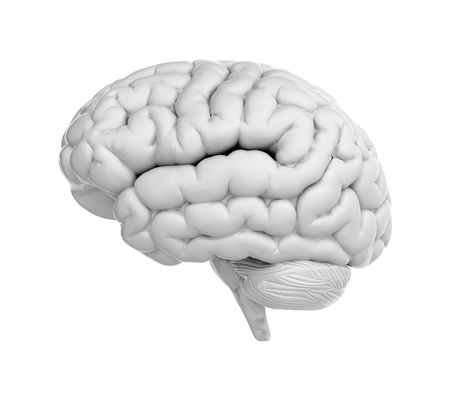 power of the brain: Rendering 3D di cervello su sfondo bianco