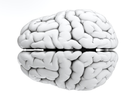 brain: 3d render of brain on white background