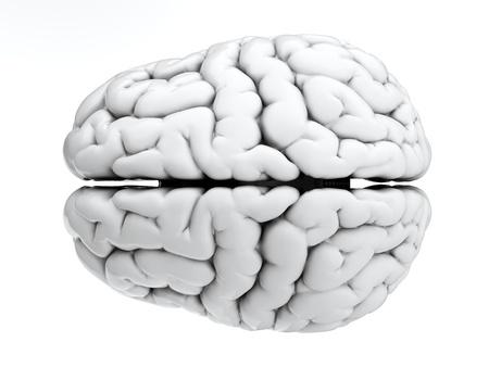 3D render van de hersenen op een witte achtergrond