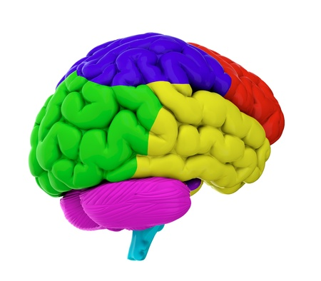 3d render of brain on white background Stock Photo - 14095425