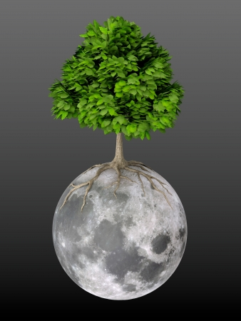 3D render of tree growing on Moon black background photo