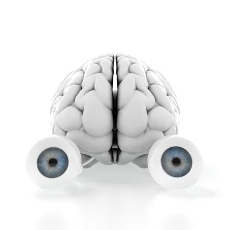 percepción: 3d del cerebro con los ojos en el fondo blanco