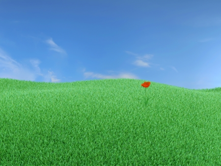 One red poppy in the middle of green meadow photo