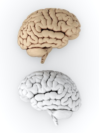 brain and thinking: 3D illustration of white and brown human brain on white background Stock Photo