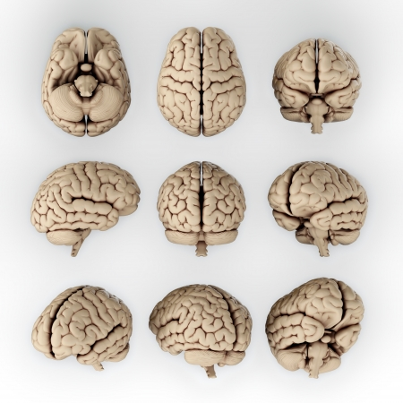 brain and thinking: 3D illustration of human brain in different angles Stock Photo