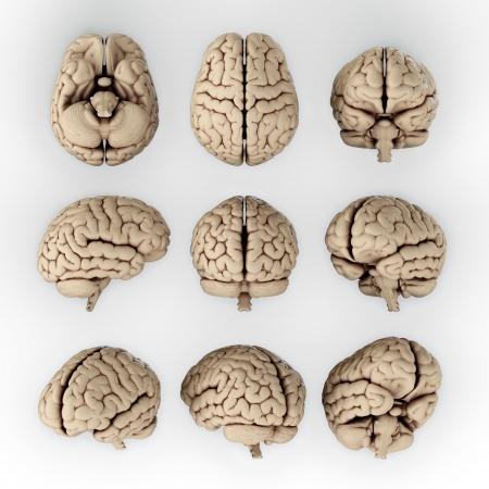 partes del cuerpo humano: Ilustración 3D del cerebro humano en diferentes ángulos Foto de archivo