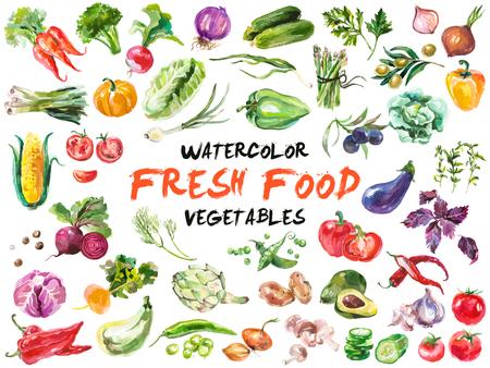 zanahorias: Acuarela pintada colección de verduras. Dibujado a mano elementos de diseño frescos los alimentos aisladas sobre fondo blanco. Vectores