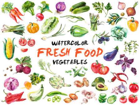 fresh food: Watercolor painted collection of vegetables. Hand drawn fresh food design elements isolated on white background.