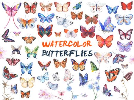 Watercolor butterflies illustration