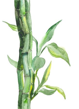 Watercolor bamboo illustration Illustration
