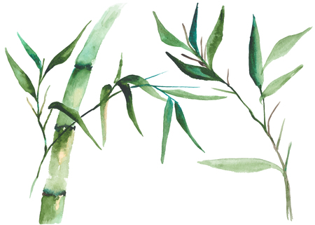 Watercolor bamboo illustration Çizim