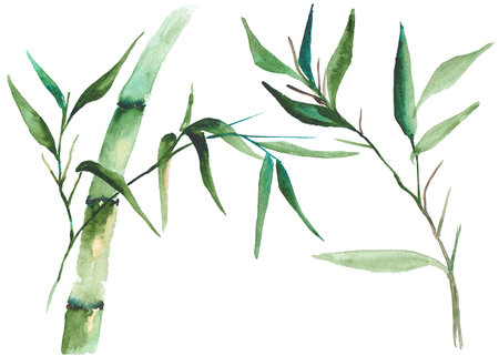 Watercolor bamboo illustration Banco de Imagens