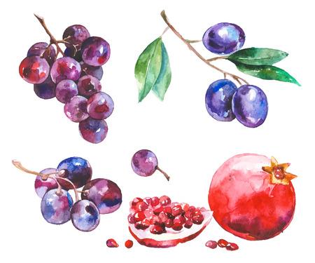 Aquarell gemalte Sammlung von Früchten. Hand gezeichnete frische Lebensmittelgestaltungselemente lokalisiert auf weißem Hintergrund.