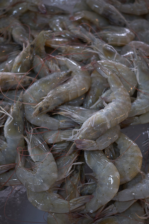 Crevettes fraîches sur glace, groupe de crevettes à vendre sur le marché Banque d'images