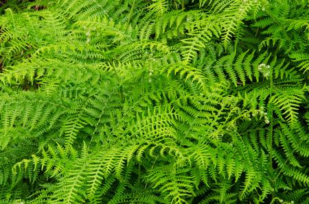 screen savers: Green ferm background Stock Photo