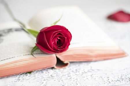 Open book and red rose for World Book Day, celebrated on 23rd of April.