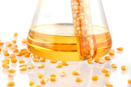 Beaker of BioFuel made from corn on white ground, with display of corn kernels close-up