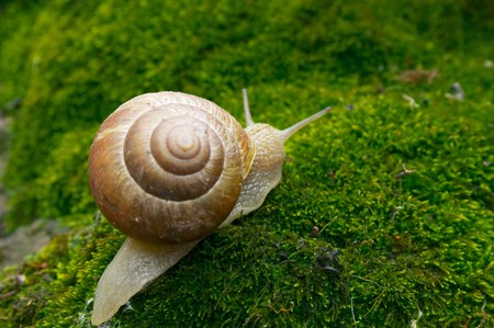 Snail on moss Stock Photo
