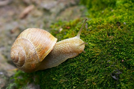 snail on a moss Stock Photo