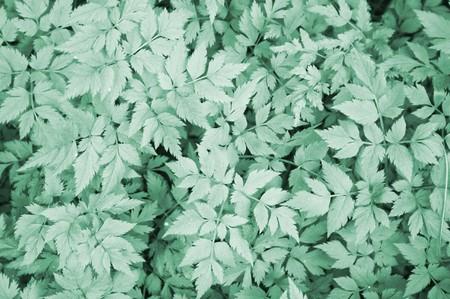 light green plant pattern Stock Photo - 7489368