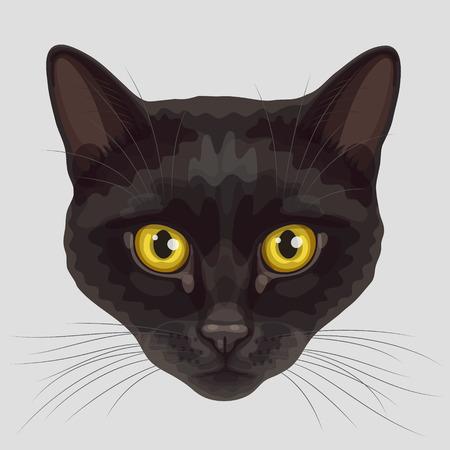 kotów: Drawn stylizowane pysk czarne krótkie futro kota z zaokrąglonymi żółtymi oczami