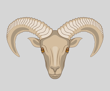 stubbornness: Drawn muzzle of ram with big horns, on gray background. Stylized line drawing for your design