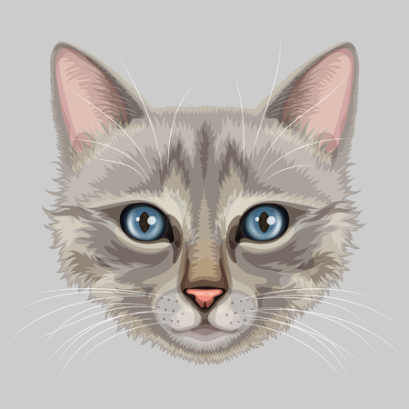 tomcat: Drawn stylized muzzle of gray cat with blue eyes and pink nose