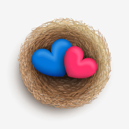 heterosexual: Blue and pink hearts are laying together in nest. Love and harmony in family life. Heterosexual couple concept
