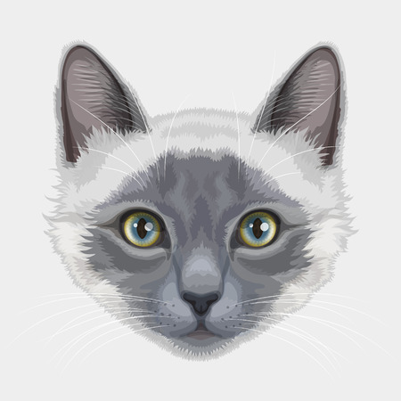 Drawn stylized of white-gray cat with yellow-blue eyes