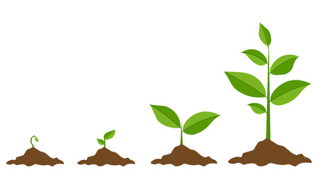 Fasi di crescita delle piante. Piantare un albero infografica. Concetto di evoluzione. Germoglio, pianta, albero che cresce icone di agricoltura. Illustrazione vettoriale in stile piatto Vettoriali