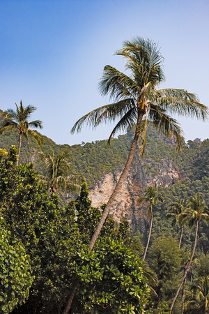 bended: bended palm tree on the background hills