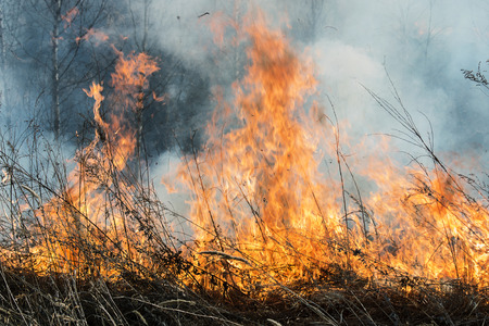 burns: flame burns dry vegetation