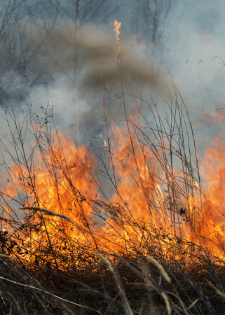 burns: forest fire burns the vegetation Stock Photo