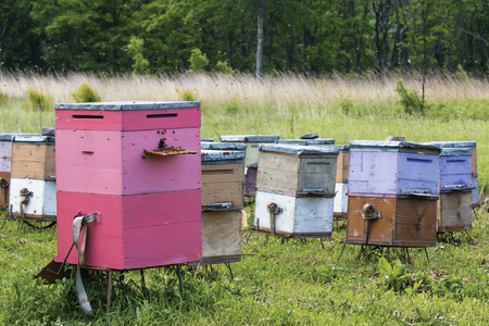 Apiary with colored clues Stock Photo