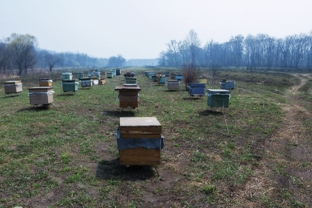 apiary was taken to the place of the honey harvest in the spring Foto de archivo - 100782449
