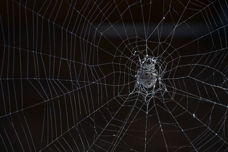 spider sits on the web