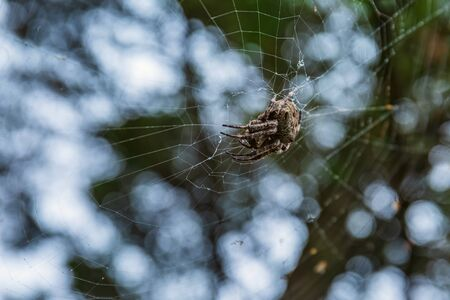 spider hunts other insects sitting on the web