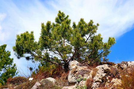 brushwood: brushwood Stock Photo