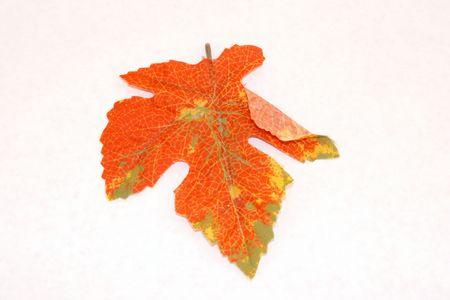 orange leaf photo