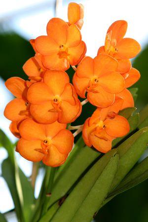 flores exoticas: hermosas flores ex�ticas de naranja Foto de archivo
