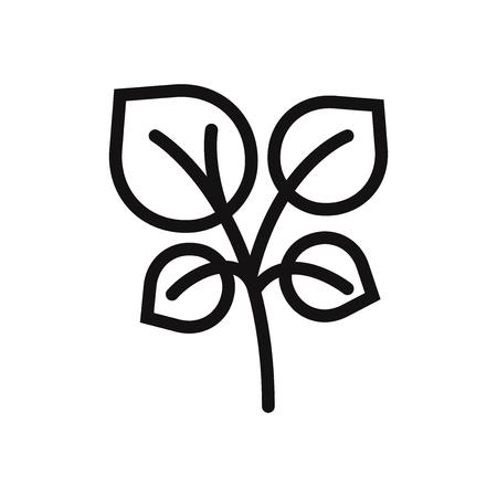 Oregano vector icon