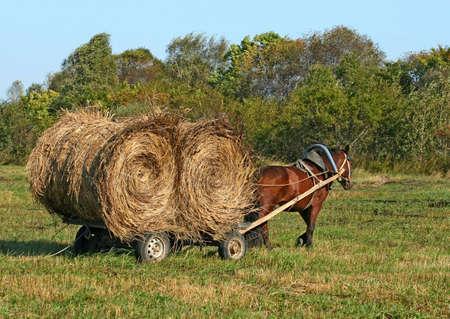 caballo tirando de un carro con heno Foto de archivo - 4906672