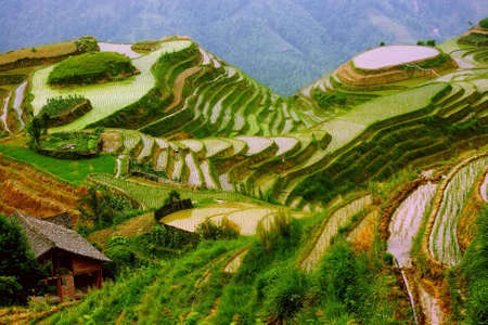 transformed: Colinas transformados en terrazas de arroz en la luz de la ma�ana, Pingan, LongJi