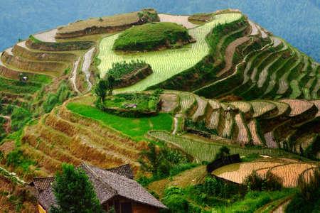 transformed: Hill, que se transform� en terrazas de arroz con unos pocos empleados, Pingan, LongJi  Foto de archivo