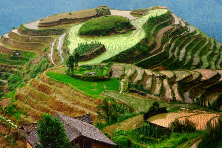 porch scene: Hill, transformed into rice terraces with a few employees, Pingan, LongJi