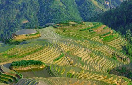 Yunnan  rice terraces in the evening light, Pingan, LongJi photo