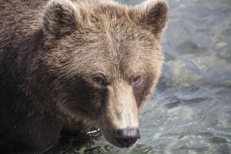 salmon falls: Bear Lake Kuril, Kamchatka, Russia