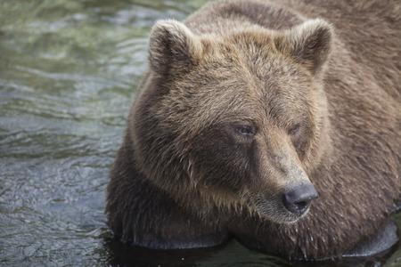 kuril: Bear Lake Kuril, Kamchatka, Russia