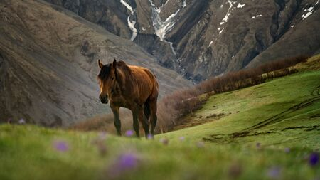 Beautiful horse going up the hill on the green meadow in the mountains