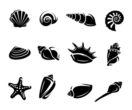scallop: Seashells set  Vector